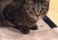 Parsippany-Troy Hills Township Municipal Departments-Animal Control - Parsippany, NJ