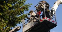 K & S Tree Service - Russellville, AL