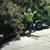 Redding Tree Service Inc.