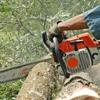 Salas Tree Service