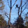 Boston  Tree Company