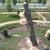 Trees Of Carolina LLC