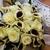 Lexington Florist