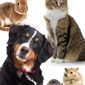 Brattleboro Veterinary Clinic - Brattleboro, VT
