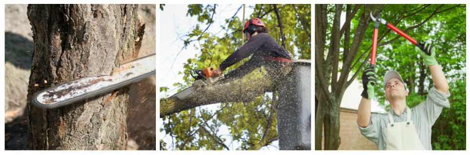 To Protect Your Trees From Seasonal Problems Call 419 491 4293