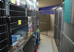 Animal Wellness Clinic - Michigan City, IN