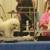 Best Friends Dog Salon
