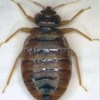 Medrano Pest Control