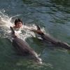 Dolphin World