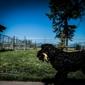A Pet Boarding Retreat - Kalispell, MT