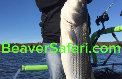 Bailey's Beaver Lake Striper Guide Service - rogers, AR