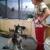 Animal Medical Clinic PA