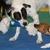 Mesilla Valley Pet Resort