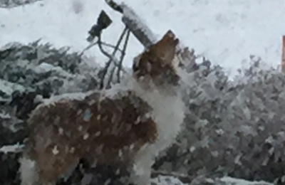 Bark & Purr - Boise, ID. I am sick and tired of these snow storms!