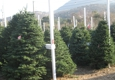 Clayton Valley Pumpkin Farm & Christmas Trees - Clayton, CA