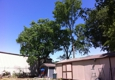 william tree service - Houston, TX