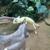 Calico Creek Feed & Pet