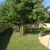 Yard Dog Fence