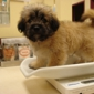 Animal Care Center - Springfield, MO. Getting weighed