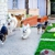 Pawliday Inn Pet Resort