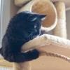 Alex's Feline Training And Behavior Consulting