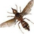 Bug Busters Termite & Pest Control