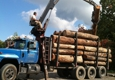 Dead Wood Lumber Company Inc. - Morrisdale, PA