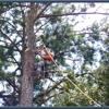 Daniel Martin Tree Professional