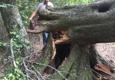 Mountaineer Tree Surgeons