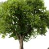 Royer Tree Service Inc