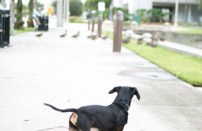 Lake Jesup Animal Hospital - Winter Springs, FL. Even at 24 years old he loved to chase ducks...