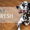 Mobile Pet Wash LLC