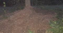 Hank's Stump Grinding - New Orleans, LA. Gigantic oak stump, just gone!
