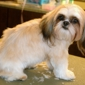 Sparky's Pet Grooming - Los Angeles, CA