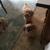 Click!Pawsitive Dog Training