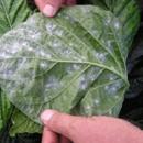 Florida Environmental Pest Management Inc.