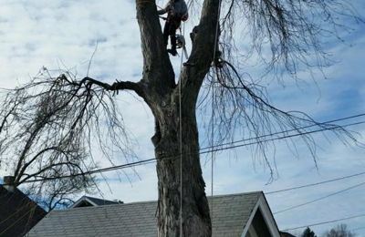 Tree Services of Omaha - Omaha, NE