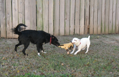 Just Like Home Pet Kennel - Youngsville, LA