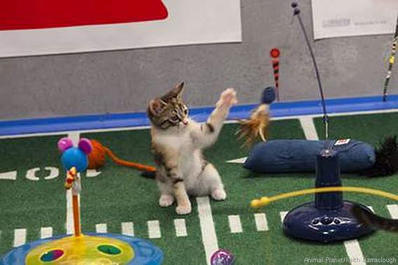 570-380-puppy-bowl-kitty-halftime-show-31593_008